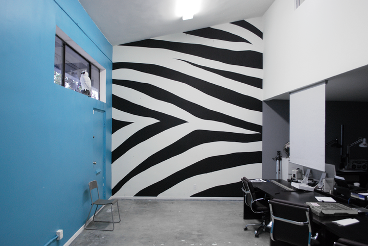 Pictures Zebras Zebra Pictures For Wall